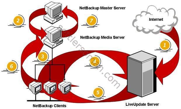 NetBackup LiveUpdate process